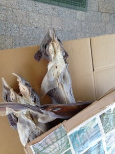 @ rest area. Are these dried sharks?