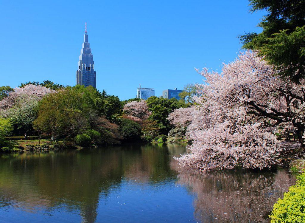 8_Shinjuku_Gyoen_National_Garden_-_sakura_3