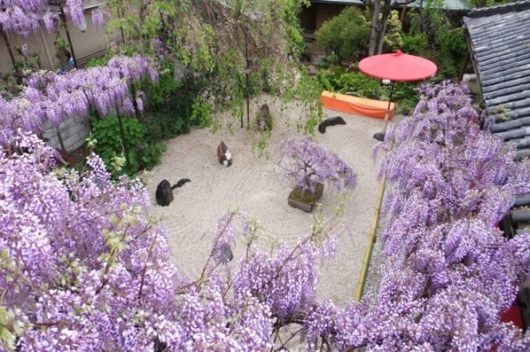 Shindachijuku Wisteria Garden, Osaka