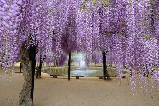 shirai oomachi park