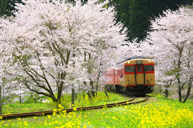 Scenic Train in Kyoto