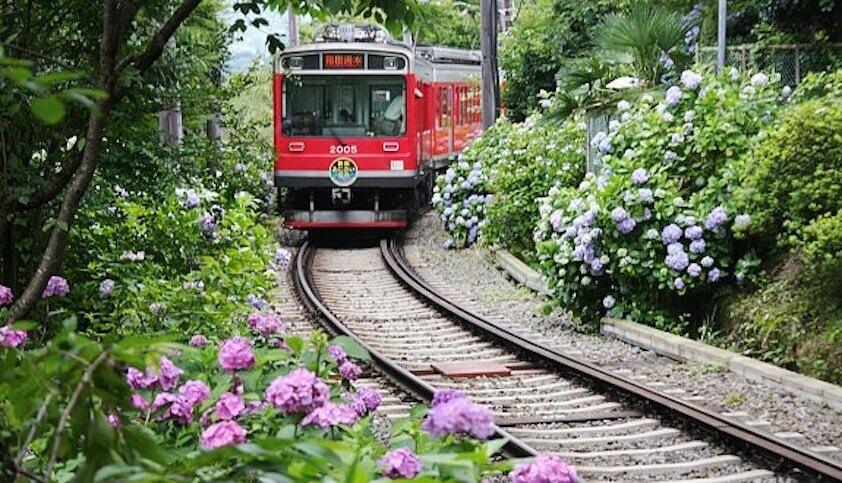 Hakone Tozan Railway Hydrangea train