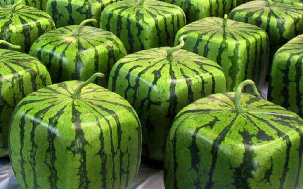 japans squared cube watermelon