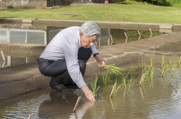 akihito rice planting emperor
