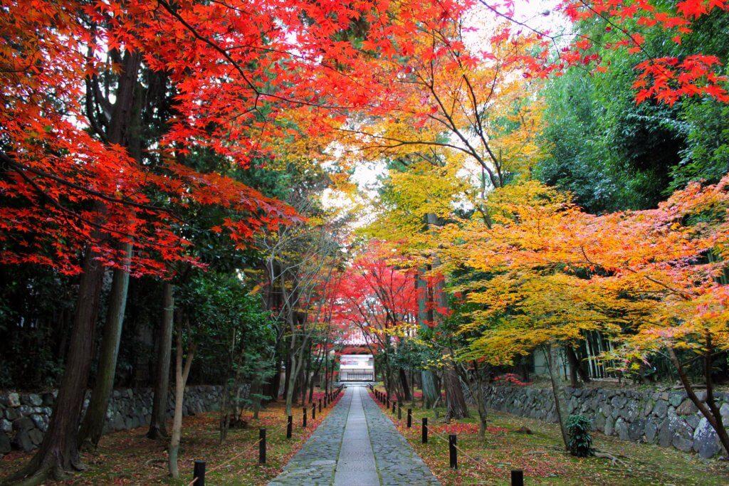 Japan fall leaves path